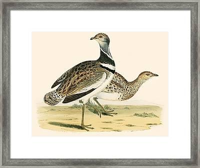 Little Bustard Framed Print by Beverley R Morris