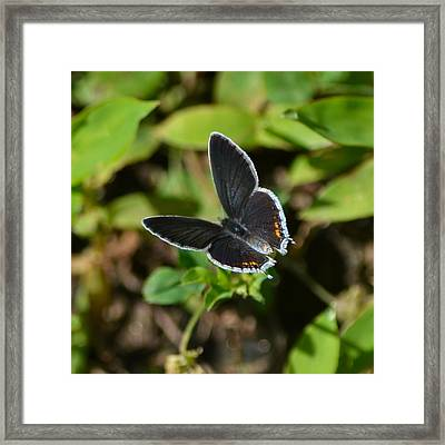 Little Butterfly At My Feet Framed Print by Mary Zeman