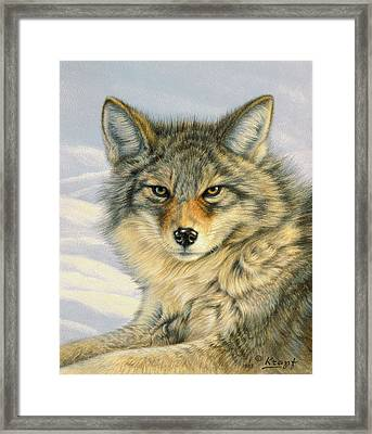 Little Coyote Framed Print by Paul Krapf