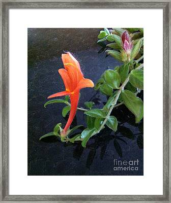 Little Dancing Dolphin Plant Framed Print by Brenda Brown