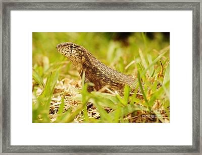 Little Dinosaur Framed Print by Lynda Dawson-Youngclaus