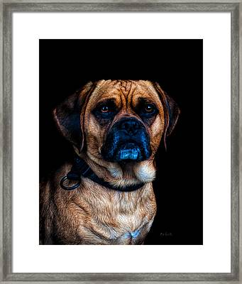 Little Dog Big Heart Framed Print by Bob Orsillo