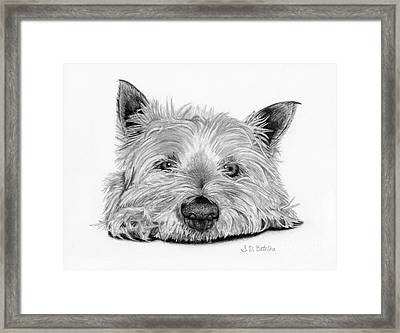 Little Dog Framed Print by Sarah Batalka