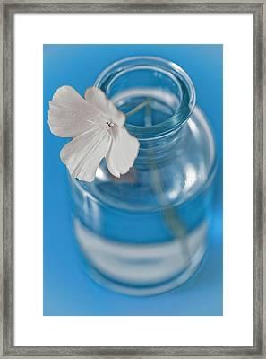 Little Flower In A Vase Framed Print by Frank Tschakert