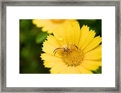 Little Friend Framed Print by Anna Polishchuk