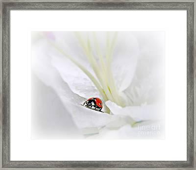Little Ladybug Framed Print by Morag Bates