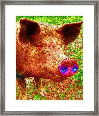 Little Miss Piggy - 2013-0108 Framed Print by Wingsdomain Art and Photography