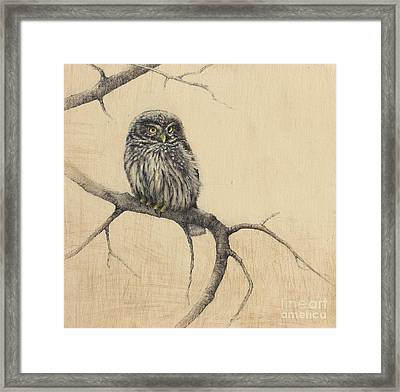 Little Owl Framed Print by Lori  McNee