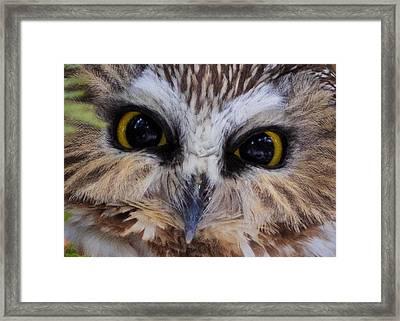 Little Owls Framed Print by Everet Regal