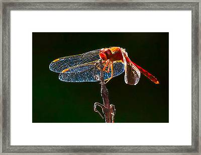 Little Red Dragon 1 Framed Print by Bill Caldwell -        ABeautifulSky Photography