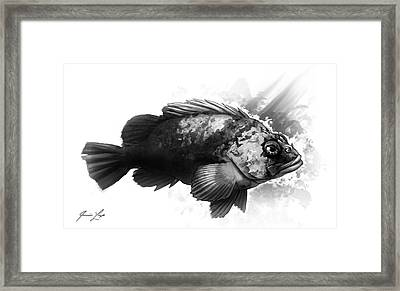 Little Rock Framed Print by Javier Lazo