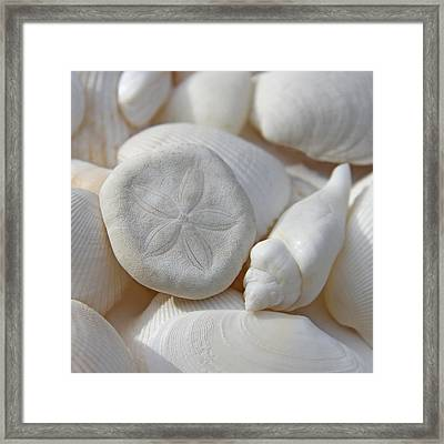 Little Sand Dollar And Seashells Framed Print by Jennie Marie Schell