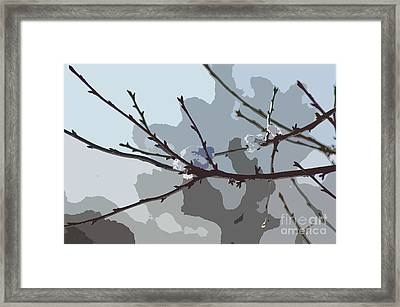 Little Snowball Framed Print by Carol Lynch