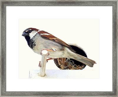 Little Sparrow Framed Print by Karen Wiles