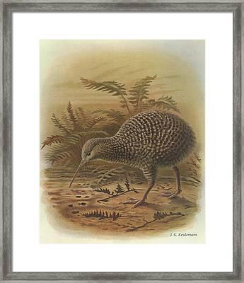 Little Spotted Kiwi Framed Print by J G Keulemans