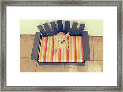 Little Sweetie Framed Print by Laurie Search