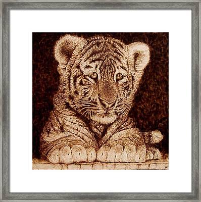 Little Tiger Framed Print by Cara Jordan