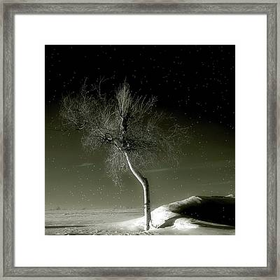 Little Tree Framed Print by Gothicrow Images