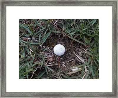Little White Mushroom Framed Print by Jenna Mengersen