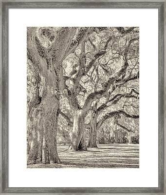 Live Oaks-1 Framed Print by Bill LITTELL