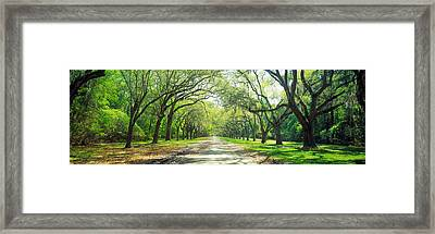 Live Oaks And Spanish Moss Wormsloe Framed Print by Panoramic Images