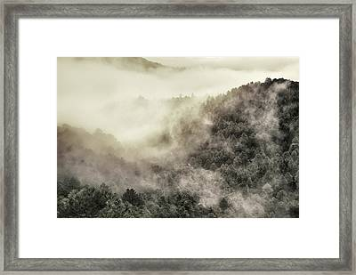 Live Wild  Framed Print by Guido Montanes Castillo
