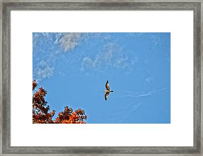 Live Your Dreams Framed Print by Sonali Gangane