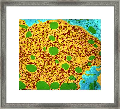 Liver Cell Framed Print by Prof Cinti & V. Gremet/spl