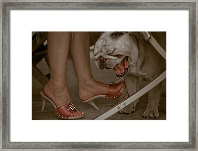 Living A Dog's Life Framed Print by Loriental Photography