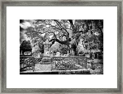 Living Cemetery Framed Print by John Rizzuto