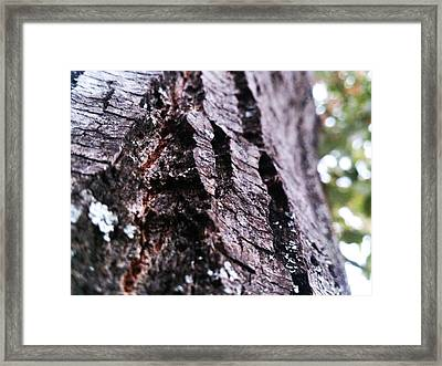 Living Dead Framed Print by Lucy D
