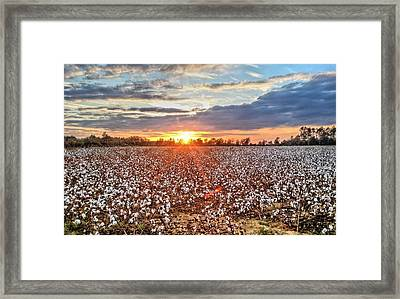 Living In High Cotton Framed Print by JC Findley