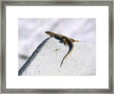 Lizard Framed Print by Ramona Matei
