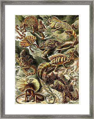 Lizards Lizards And More Lizards Framed Print by Unknown