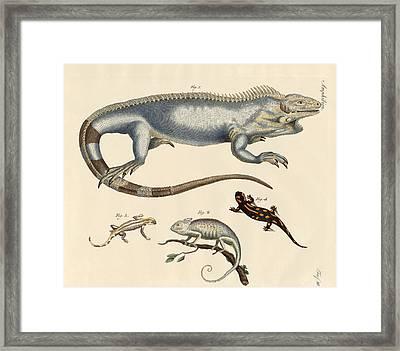 Lizards Framed Print by Splendid Art Prints