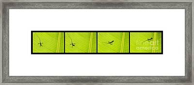 Lizards Framed Print by Tim Gainey