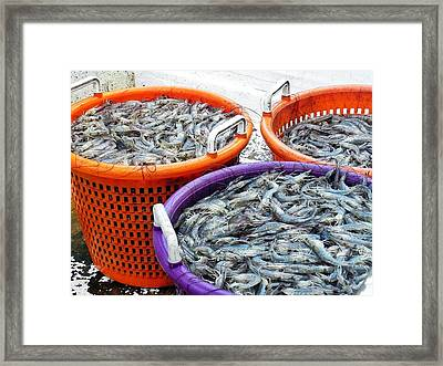 Loaves And Fishes Framed Print by Patricia Greer