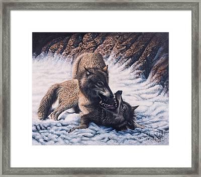 Lobos Framed Print by Ricardo Chavez-Mendez