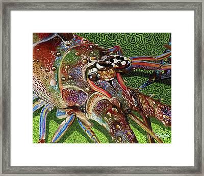 lobster season Re0027 Framed Print by Carey Chen