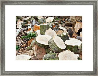 Logging Operation Framed Print by Ashley Cooper