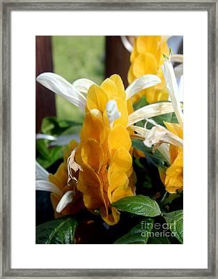 Lollipop Plant  Framed Print by Kathy  White