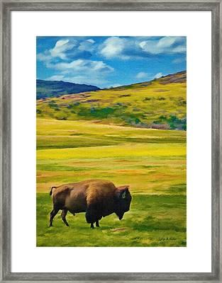 Lone Buffalo Framed Print by Jeff Kolker