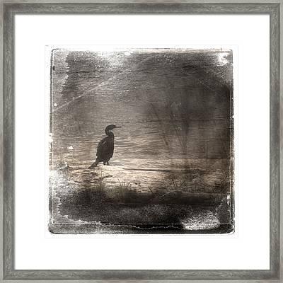 Lone Cormorant Framed Print by Carol Leigh