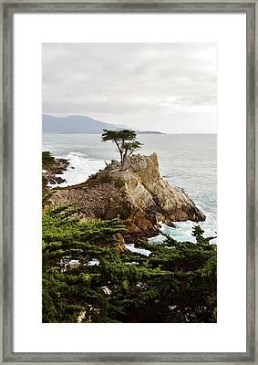 Lone Cypress Framed Print by Barbara Snyder