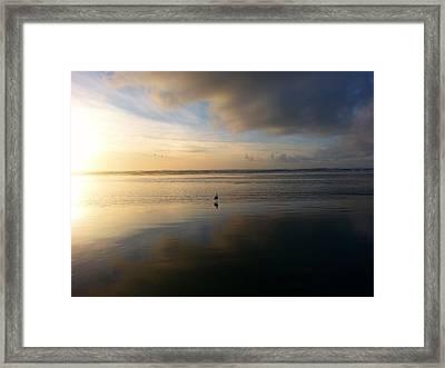 Lone Gull Framed Print by Julie Olsen