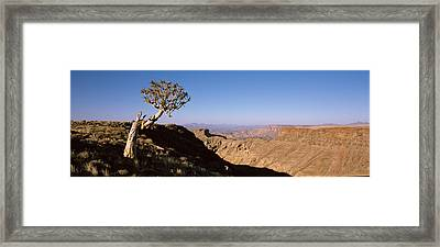 Lone Quiver Tree Aloe Dichotoma Framed Print by Panoramic Images