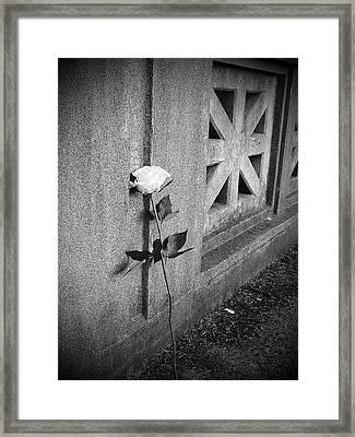 Lone Rose Framed Print by HW Kateley