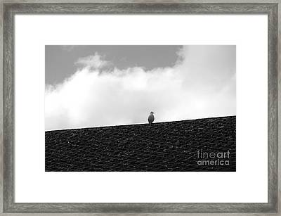Lone Seagull On A Rooftop Framed Print by John  Mitchell