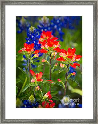 Lone Star Blooms Framed Print by Inge Johnsson