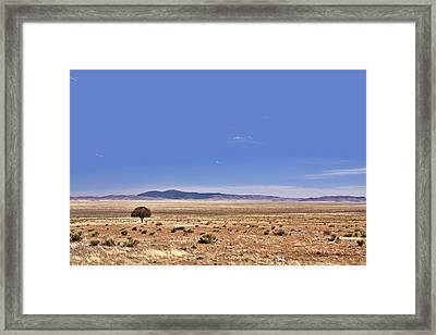 Lone Tree In The Black Hills Framed Print by Christine Till